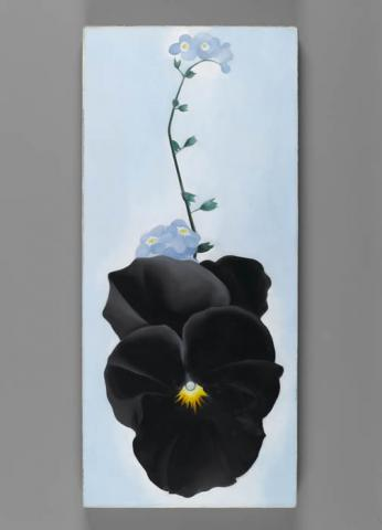 Black Pansy & Forget-Me-Nots (Pansy), 1926. Georgia O'Keeffe